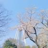 【一宮】138タワーパークでお花見ピクニックをしてきた!