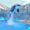 【名古屋】名古屋港水族館に行って、シャチを見てきた!
