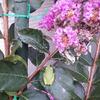 アマガエルやらコガネムシやら庭にいろいろやってきてる