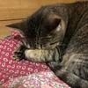 揺れを感じ、猫ちゃんはどこかに避難しています。
