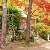 京都・嵯峨野 - 人知れず染まり行く嵯峨野の紅葉