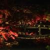 京都の紅葉 『永観堂 禅林寺』 ~混雑極まりない京都で予定外のライトアップでの紅葉狩りとなりました~