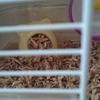 【ハムスター飼育】夜中室温15度くらいに下がるため、マルチヒーターを「おへや」の下に敷きました。