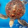 【八重山】黒島での予定を狂わせる黒島研究所のウミガメ