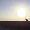 続・石垣島の猫