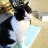 外猫と愛猫の距離