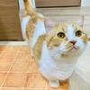 ぷにぷにマットで、愛猫にも隣人にも優しいおうち作り