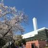 板橋区周辺の桜の名所色々。