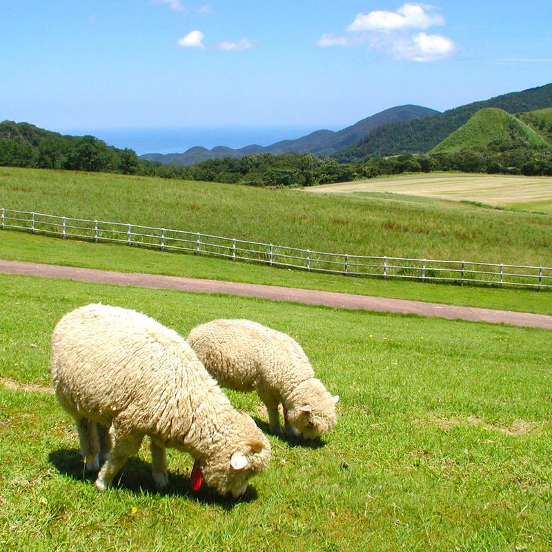 別世界のような景色に癒される避暑地・京都の「高原」