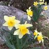 春(^^)‥花粉症も発生(¬_¬)