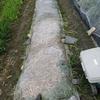 夏野菜の植え付け!まずはトマトを植える場所作りです。