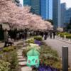 フシギダネ、満開。【ポケモンGO】2018年3月コミュニティ・デイの思い出写真