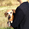 真っ直ぐな思いってさ、きっと人の心まで変えてしまうんだよ 〜犬を飼うこと。犬に育てられること〜