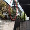 屋根より高いシュロの木を伐採しました