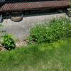 また 除草の季節がやってきました