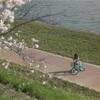 土浦の桜並木
