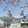 新潟市中央区「ほんぽーと」と「東公園」の桜2021