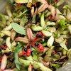 ベニバナヤマシャクヤクの種を採取