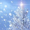 音響セラピーサロン風の木 12月の予定と今年最後の瞑想会のお知らせ