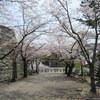 【行った】三重県松阪市 松阪公園(松坂城跡)の桜の見どころ、駐車場情報なども