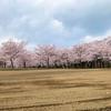 曇天で撮った桜の写真を加工でSNS投稿用写真にしたい!