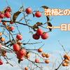 渋柿を美味しく食べるための実験~一日目~