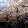入学式&S4棟の桜。