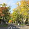 GoTo北海道 2020.10.18-21 3日目 北大の秋にどっぷり Ara-kanふたり旅