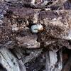今日もきずなの森でクワガタ幼虫を割木採集
