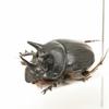 甲虫標本追加しました