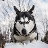 犬のフードアグレッシブについて〜アメリカの事例を参考に