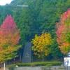 第239回blog♪やっと秋。