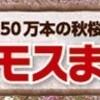 昭和記念公園 「コスモスまつり」