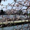 彦根城までお花見ウォーキング