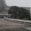 雪でテンションが上がった1日