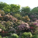 ボタニカルな場所!泉ボタニカルガーデンの写真