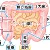 腸は「第二の脳」?!〜小腸と大腸の役割のまとめ