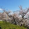 週末 散歩ついでに桜を撮影してみた