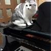 バッハが好きな猫