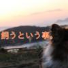 愛犬を熱中症から守るためには・・・