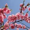 【福島】桃源郷の如く、『花見山公園』