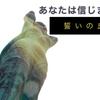 空撮 ドローン4K Drone Japan【恋人の聖地】