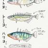 本願清水イトヨ生息池(福井県大野)