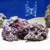 (海水魚)Sグレード形状お任せライブロック Mサイズ(1個) + スタンドNo.5 セット 本州・四国限定