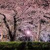 【水曜どうでしょう】桜前線捕獲大作戦編・見所・名言・まとめ