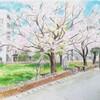 桜の樹 公園にて