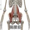 腸腰筋エッセンス