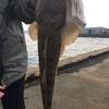 釣り女子さんから学んだ堤防のマゴチ釣りテクニックが面白い