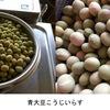 青大豆? 先日購入.でも,それまで全く知らず.NHK「新日本風土記」をみても,多くの地域で食べられてきたよう--.+ 豆の花/大豆あれこれ(1)