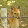 奈良散歩~世界遺産と国宝と鹿と